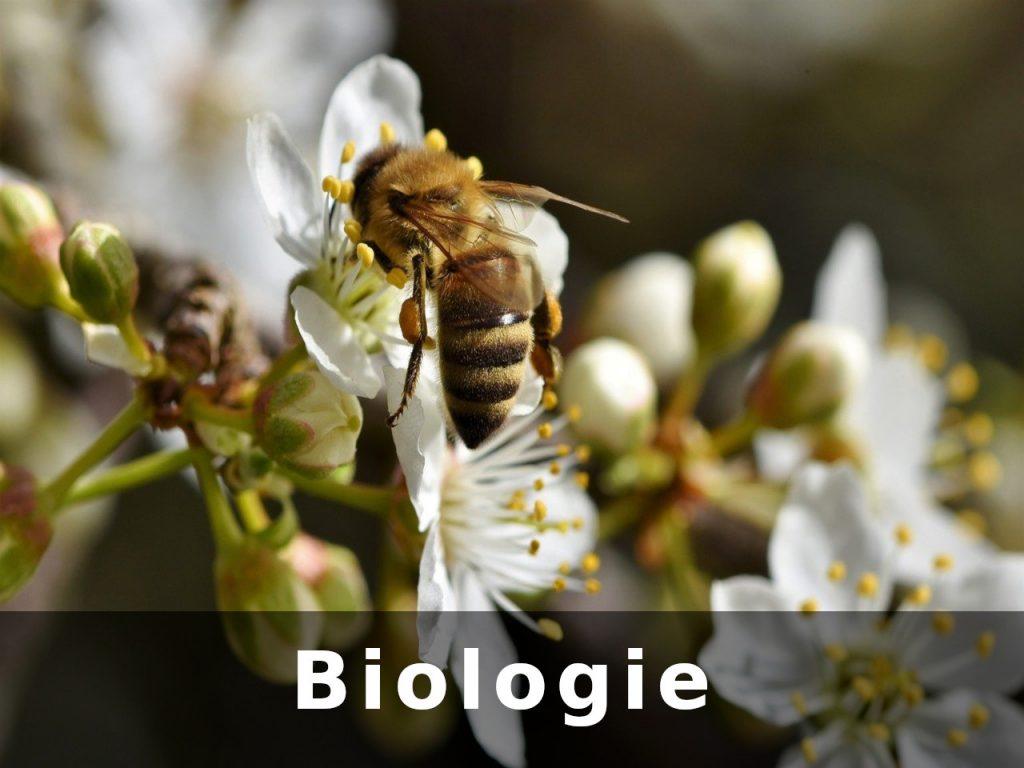 Link zu Biologie-Tutorials